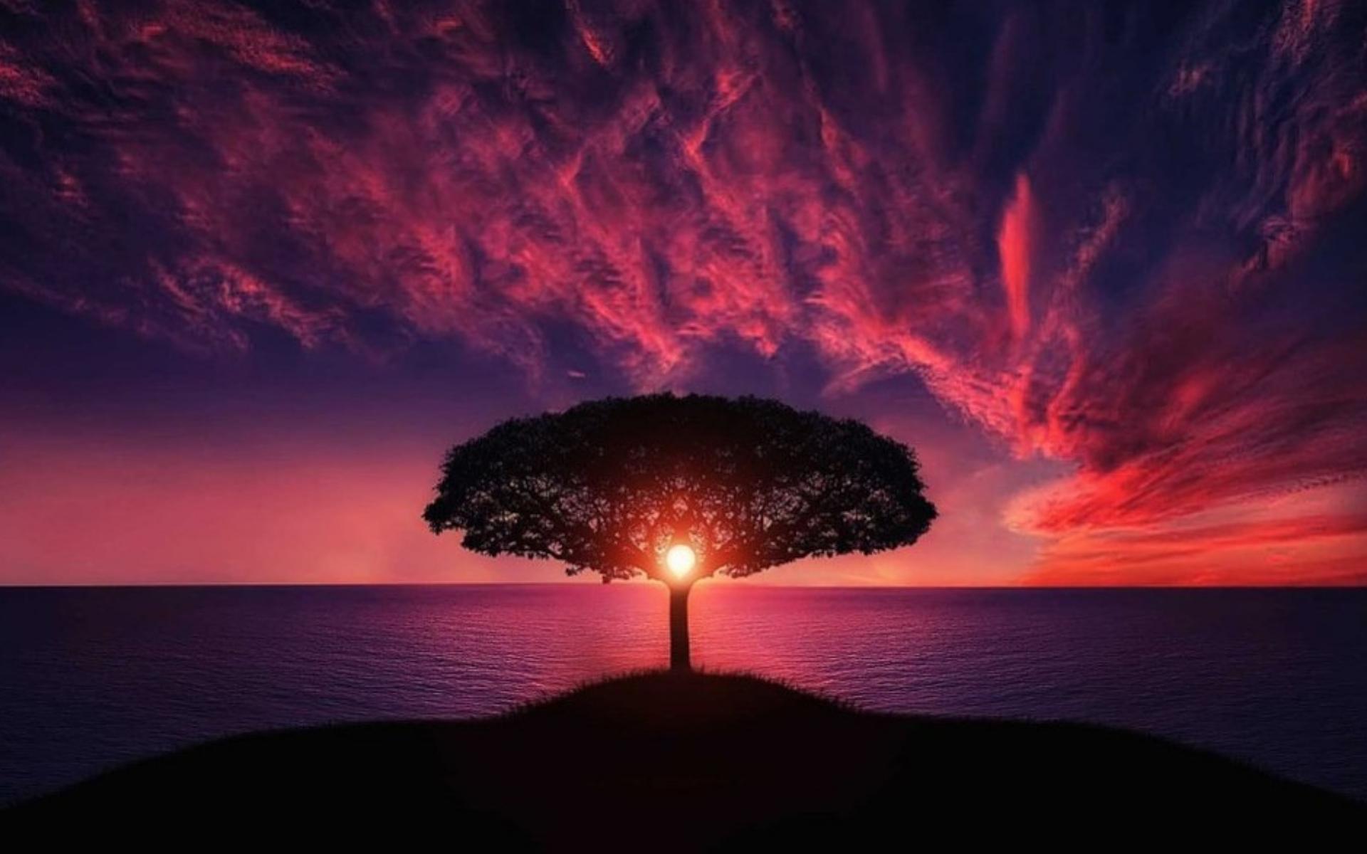 ευη-χατζηγιαννη-ψυχοθεραπεία-θεραπείες Ρέικι-δέντρο Ρέικι