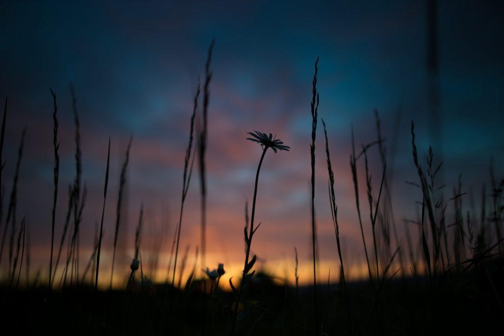 ευη-χατζηγιαννη-ψυχοθεραπεία-θεραπείες Ρέικι-ηλιοβασίλεμα