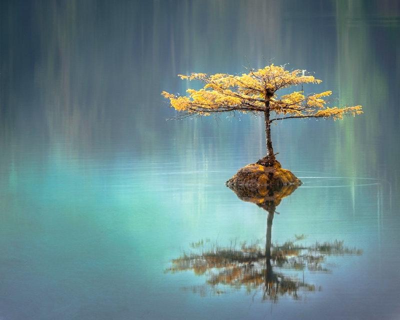 δέντρο σε λίμνη