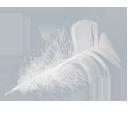 ψυχοθεραπεία-θεραπείες Ρέικι-φτερό στον άνεμο